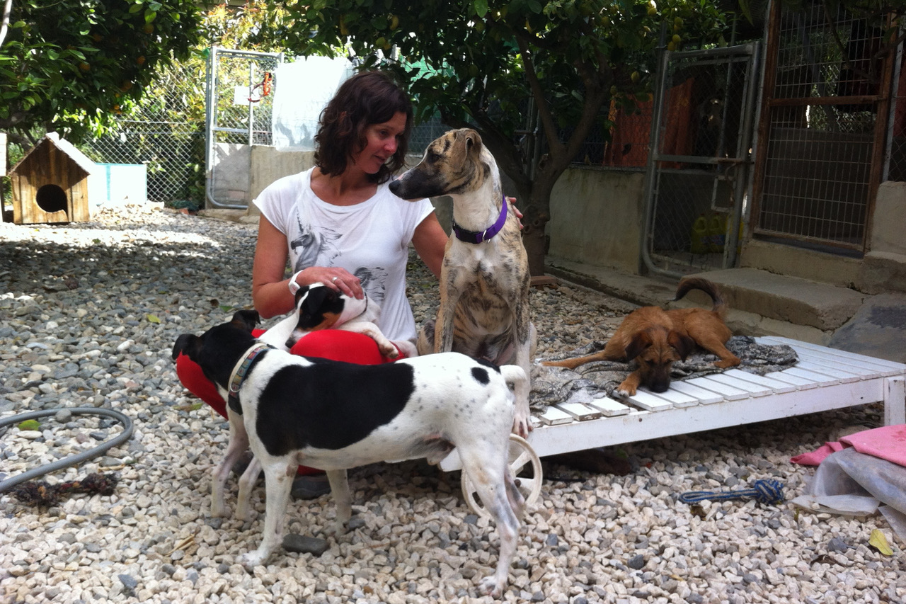 SOS Animals Switzerland was set up to help dogs in the Spanish shelter find homes