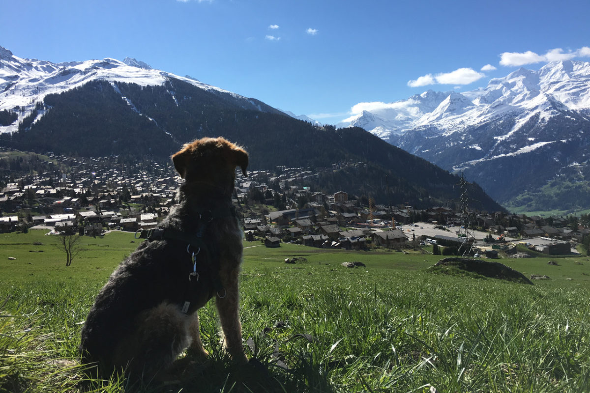 Animal lover Sarah's dog Rebel admiring the view above Verbier