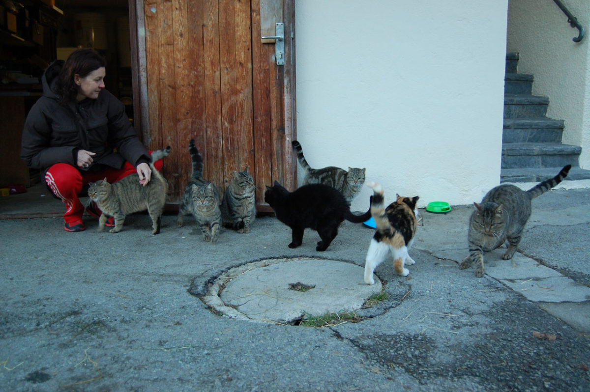 Sarah Cullen caring for the feral cat population who are now neutered and health-checked